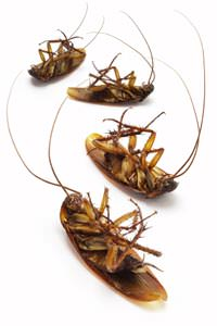 Cockroach Extermination in Cookeville